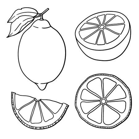 Isolated lemons  Graphic stylized drawing  Vector illustration   Illustration