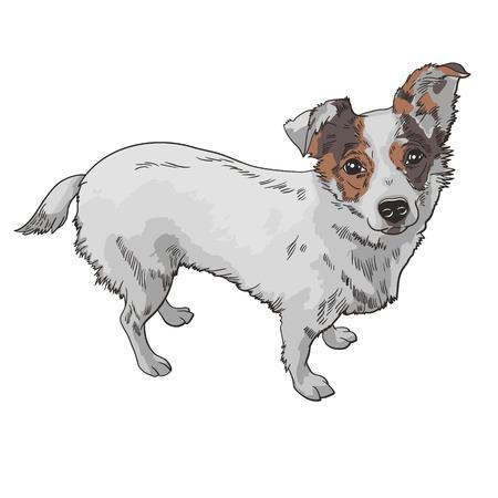 犬の黒と白のベクトル イラスト