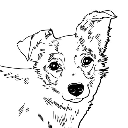 husky: Vector illustration of the dog  black and white