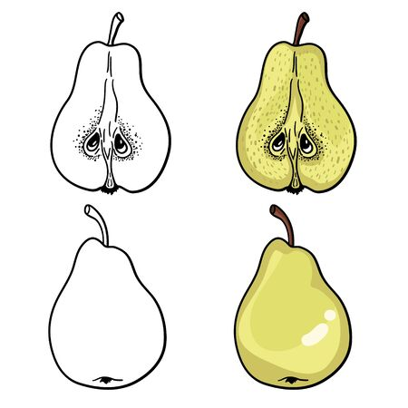 Isolated pears. Graphic stylized drawing. Vector illustration. Black and white