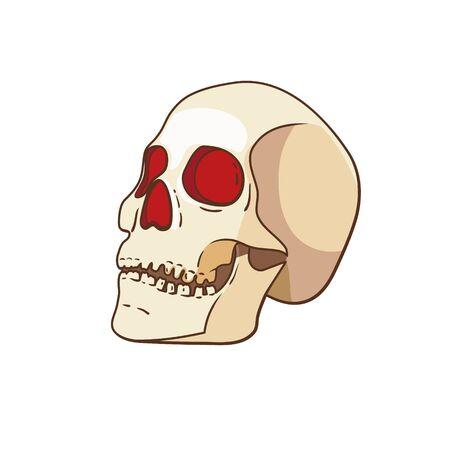 Vector skull isolated on white background