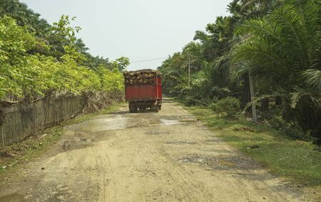 Old truck loaded with sawit palms seen in palm oil plantation in Bengkulu, Sumatra, Indonesia