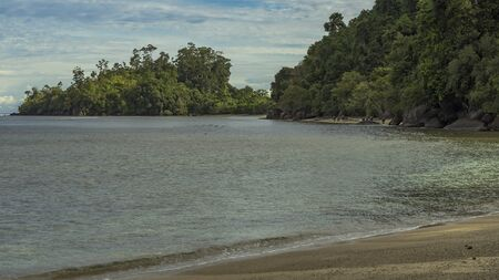 Wild beach scene with buffallos walking in the ocean next to lush jungle forest in West Sumatra, Indonesia