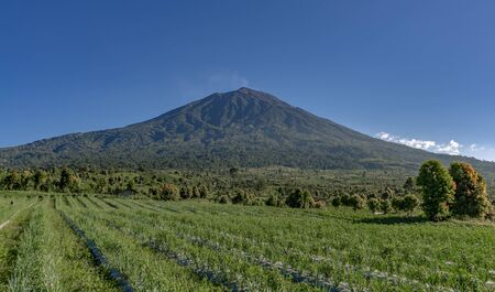 Pyramid shaped Kerinci volcano seen from gardens nearby on a clear blue sky day in Kersik Tua, Jambi, Sumatra, Indonesia