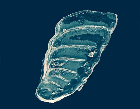 plancton: antiguo organismo planct�nico