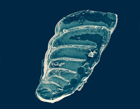 the shell of an ancient organism under electron microscope