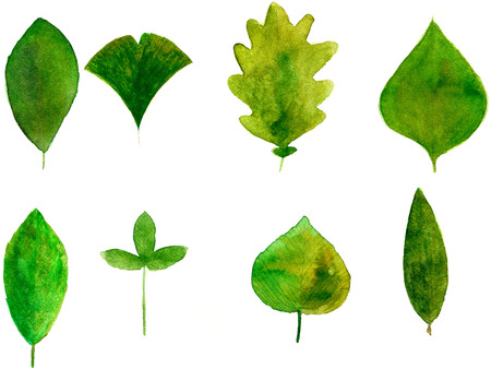 summer green leaves illustration with natural texture illustration