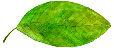 leaves illustration with natural texture illustration
