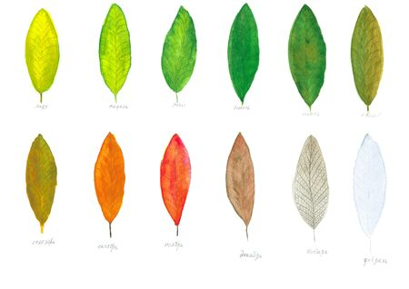 Calendar of watercolor leaves change color during the year photo