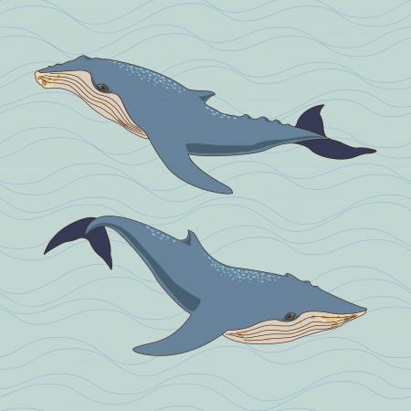 ballena azul: Ballenas