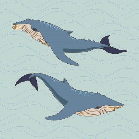 flipper: Whales