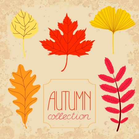 Autumn colorful leaves set Vector