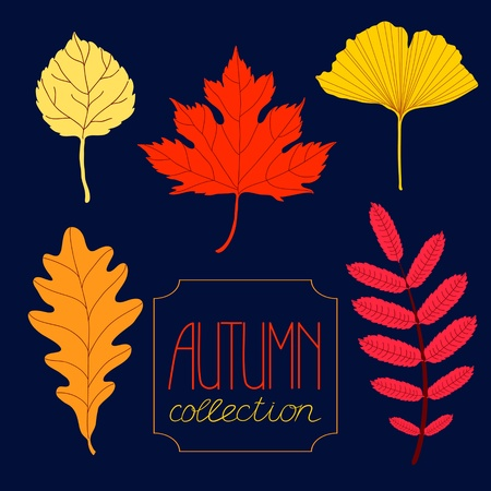Autumn colorful leaves set against dark background Vector