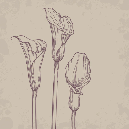 outline drawing: Calla contorno disegno di sfondo Vettoriali