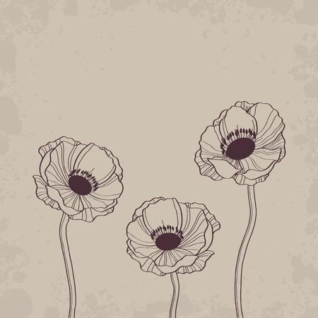 elegant vector: Anemone outline drawing  Elegant vector background Illustration