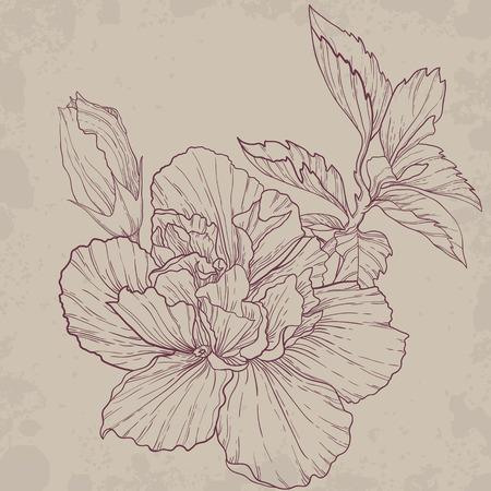 elegant vector: Hibiscus outline drawing  Elegant vector background