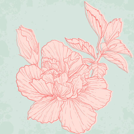 elegant vector: Hand drawing hibiscus flower  Elegant vector background