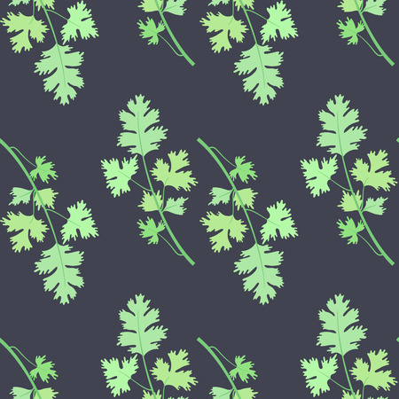 Herbs for cooking. Cilantro bunch vector seamless pattern Vector