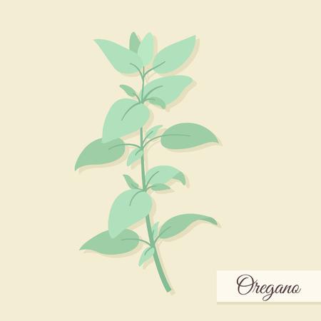 oregano: Herbs for cooking. Oregano bunch vector illustration