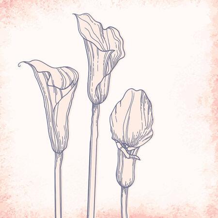 outline drawing: Calla disegno schematico. Elegante vettore sfondo