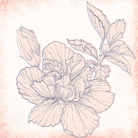 dessin au trait: Hibiscus dessin de contour. �l�gant, vecteur, fond
