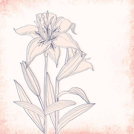 outline drawing: Lilies outline drawing. Elegant vector background