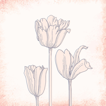 Beautiful vector background with hand drawn tulips.