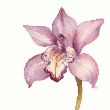 Purple orchid vector watercolor draing. Floral background
