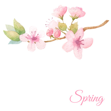 Spring fresh background with elegant blossom tree branch. Vector watercolor.