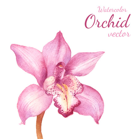 blue orchid: Purple orchid vector watercolor draing. Floral background