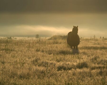 back lighting: A horse in the field. Early foggy morning. Back lighting.