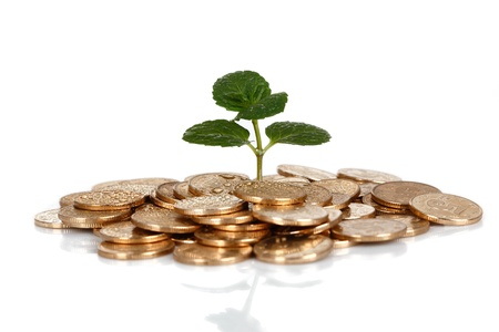 Money and plant isolated on white background Money Concept Stock Photo - 17938154