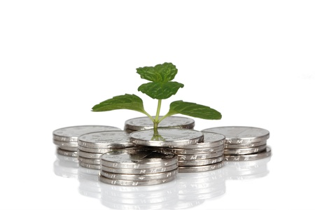 Money and plant isolated on white background Money Concept Stock Photo - 17938150