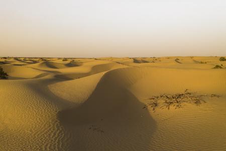 Desert with dunes