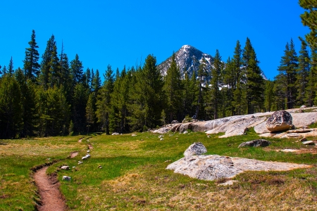 pacific crest trail: Pacific Crest Trail along Lyell fork of Tuolumne river, Yosemite National Park.