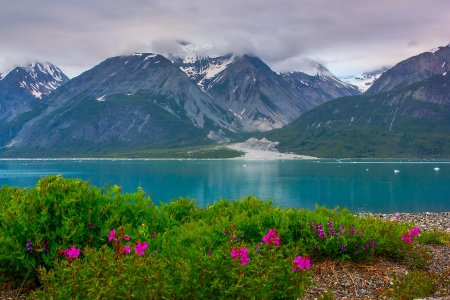Wild flowers in Glacier Bay National Park, Alaska. Color balance is correct, it is natural color of glacier water photo