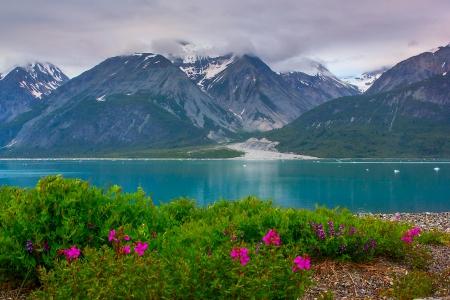 Wild flowers in Glacier Bay National Park, Alaska. Color balance is correct, it is natural color of glacier water