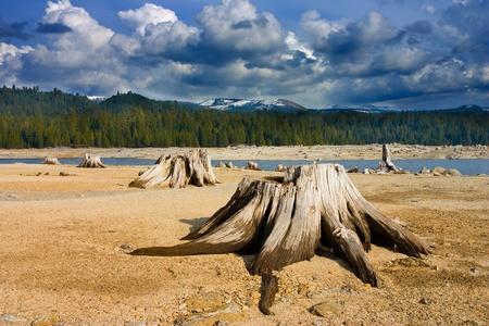 sierras: Cut trees in high Sierras, California