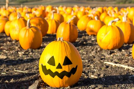patches: Pumpkin patch ready for annual festival in Half Moon Bay, California.