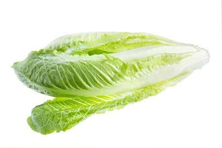 cos: Green lettuce isolated on white background .
