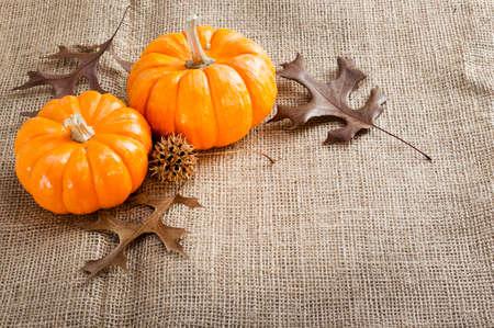 黄麻布の茶色にオレンジのミニかぼちゃ。 写真素材