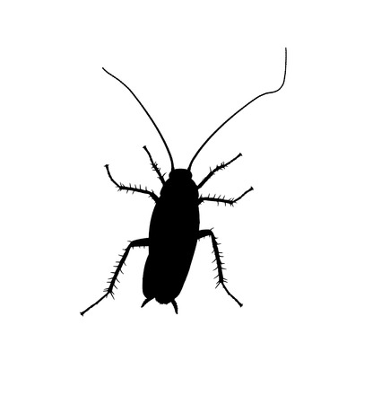 Cockroach silhuette isolated on white background. One click to transform to vector. Stock Photo