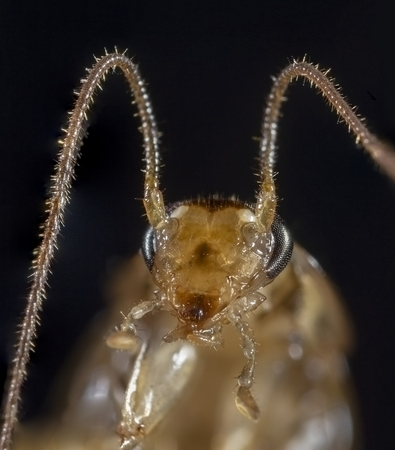 Extreme macro of cockroach head with focus on mouth. Stock Photo