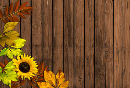 Autumn background with leaves and sunflower Stock Photo - 16404057