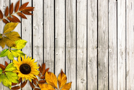 Autumn background with leaves and sunflower