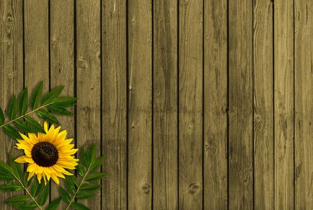 Summer background with leaves and sunflower