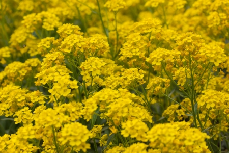 a meadow with yellow flowers