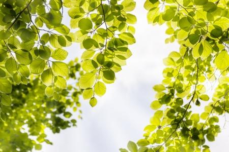 green leaves background Standard-Bild