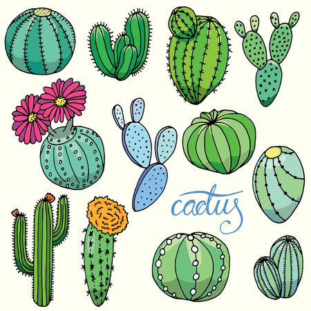 various: Set of isolated hand drawn cactus