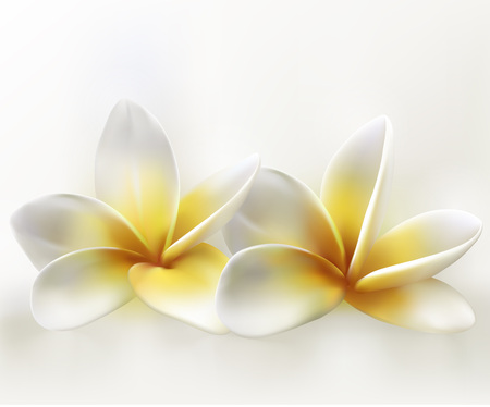 two frangipani tropical flowers on white background
